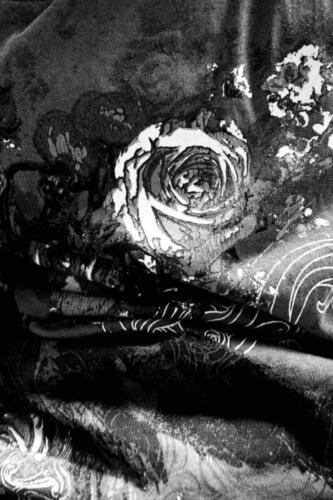 Grazziella Battilana Ricordi di un fiore